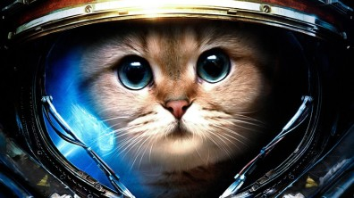 astrounaut_cat